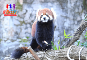 多摩動物公園の動画