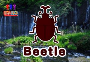 YouTube動画コラボ企画!子供向け英語!昆虫の名前