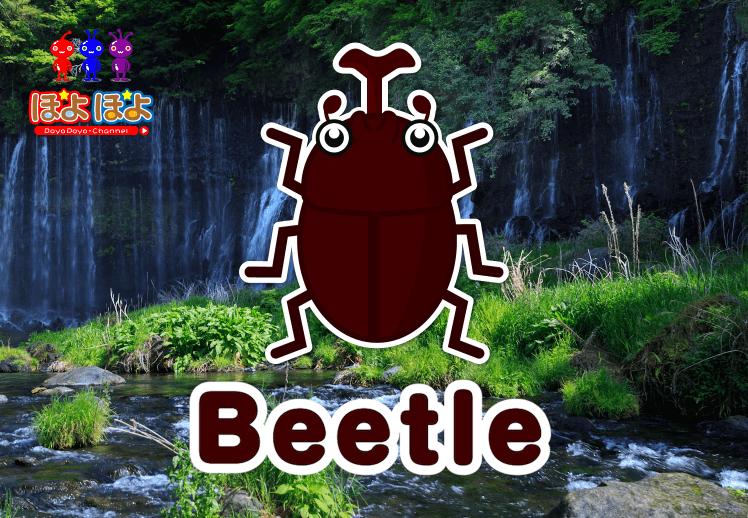 英語で昆虫の名前を覚えてみよう!