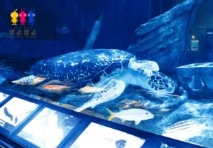しながわ水族館の動画