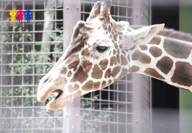 上野動物園の動物動画