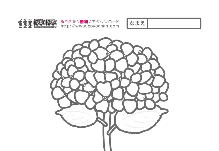 5月の無料ぬりえ|梅雨の紫陽花(あじさい)